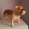 beswick bulldog