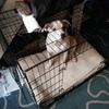 xxl black metal fold away dog crate