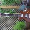 Ultra Rare 1980 Electra Solid Guitar made in Matsumoku Japan