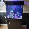 AquaReef 195' Black Marine Fish Tank