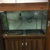 240 litre Aquarium and cabinet