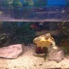 4x2x1 foot fish tank