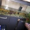3 and a half full set up fish tank