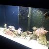 Aqua reef 300 marine setup.