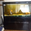 large tropical/Marine fish tank