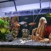 136ltr fishtank with stand