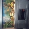 4ft fishtank