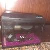 Two foot Tropical fish tank