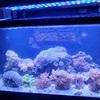 Fish tank with stock inc