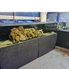 10ft fishtank steel box stand +sump