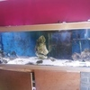 6ft marine fish tank setup no stand