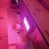 Philizon grow lights